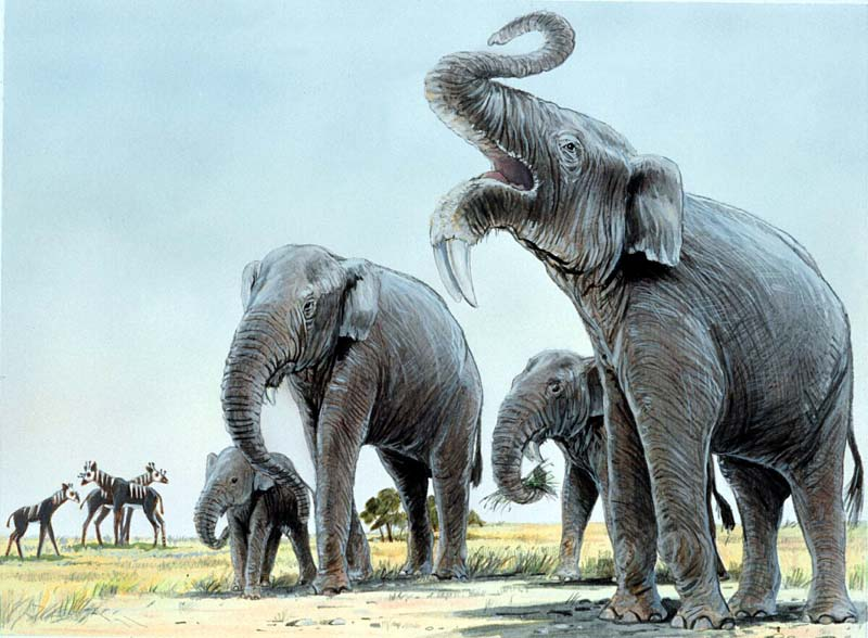 Are Elephants Mammals >> Reconstructing Stegotetrabelodon syrticus