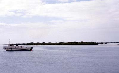 View of the mangroves approaching Balghelam (Photograph by Dr Mark Beech)