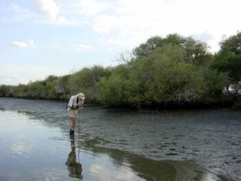 Khor Kalba - Gary Feulner searches for crabs (Photograph by Dr Mark Beech)